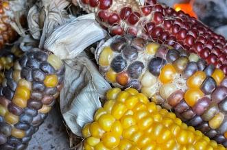 choclos nativos ONU semillas