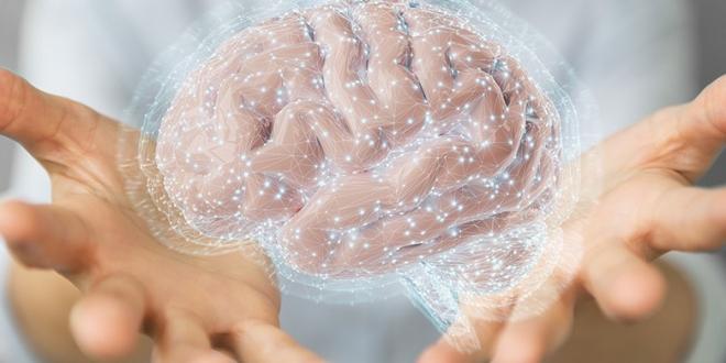 Cerebro memoria